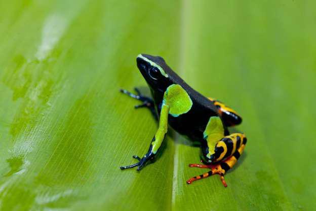 Madagascar - Thiên đường của những loài động vật kỳ lạ - Hình 13