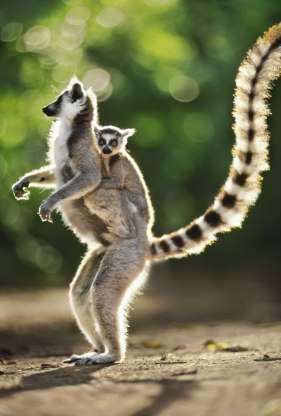 Madagascar - Thiên đường của những loài động vật kỳ lạ - Hình 7