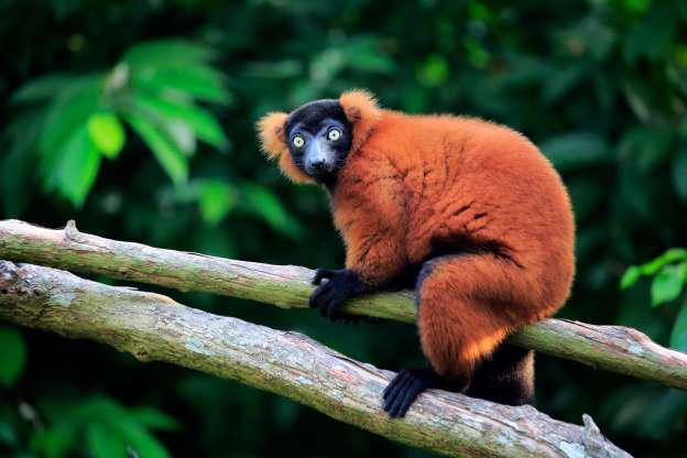 Madagascar - Thiên đường của những loài động vật kỳ lạ - Hình 2