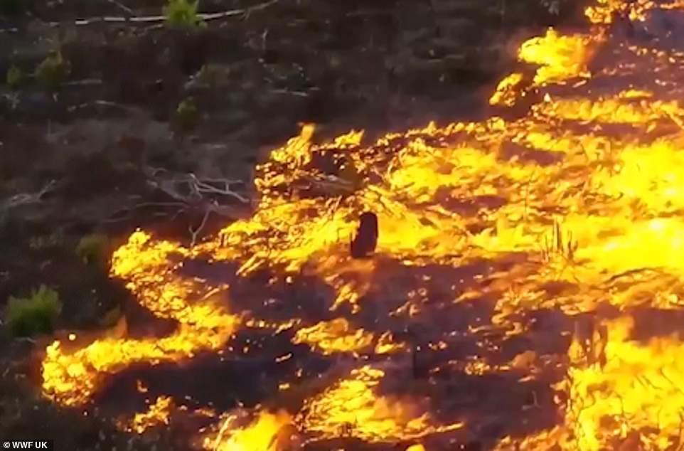 Cháy rừng Amazon: Quả bom carbon ngày tận thế giáng xuống Trái đất - Hình 1