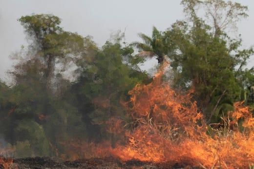Cháy rừng Amazon: Quả bom carbon ngày tận thế giáng xuống Trái đất - Hình 12