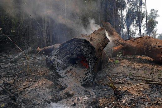 Cháy rừng Amazon: Quả bom carbon ngày tận thế giáng xuống Trái đất - Hình 14