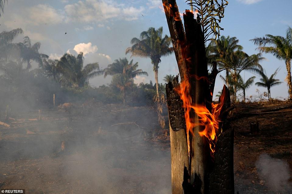 Cháy rừng Amazon: Quả bom carbon ngày tận thế giáng xuống Trái đất - Hình 8