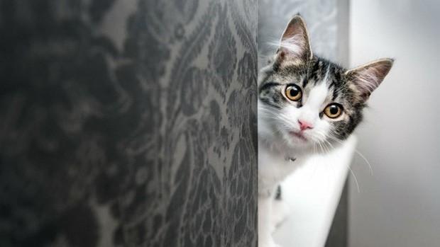 Nghiên cứu chứng minh: Lũ mèo thực sự biết tên mà bạn đặt cho chúng - Hình 2