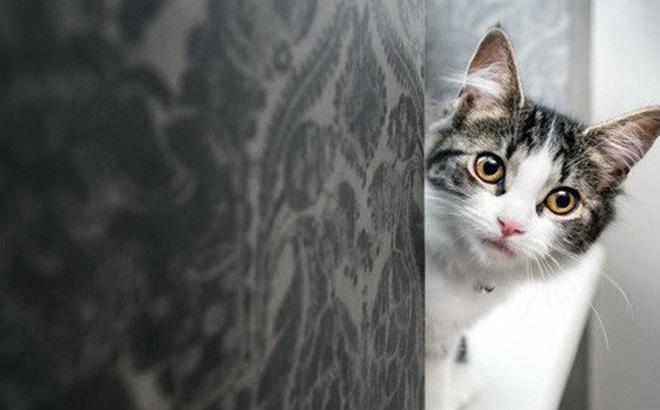 Nghiên cứu chứng minh: Lũ mèo thực sự biết tên mà bạn đặt cho chúng - Hình 1