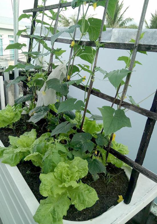 Chủ nhà mua 10 bồn tắm để trồng rau sân thượng - Hình 5