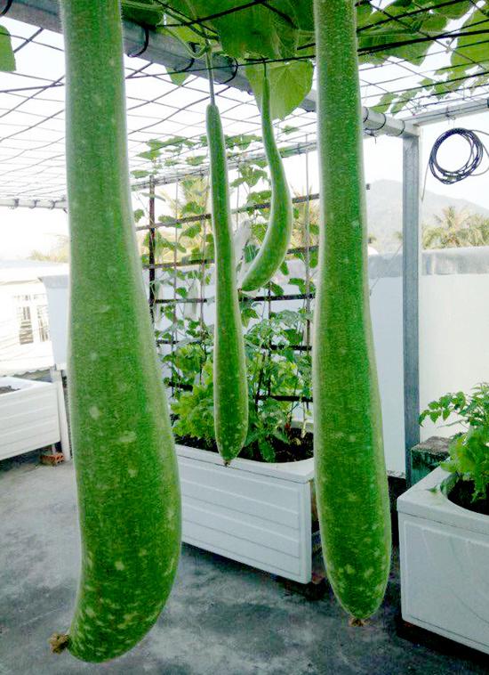 Chủ nhà mua 10 bồn tắm để trồng rau sân thượng - Hình 2