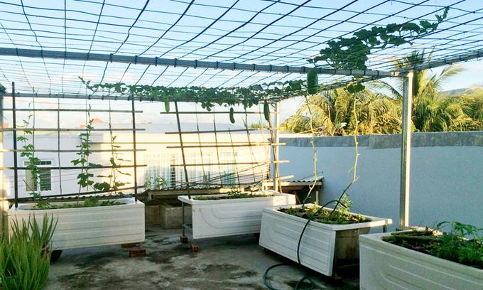 Chủ nhà mua 10 bồn tắm để trồng rau sân thượng - Hình 1