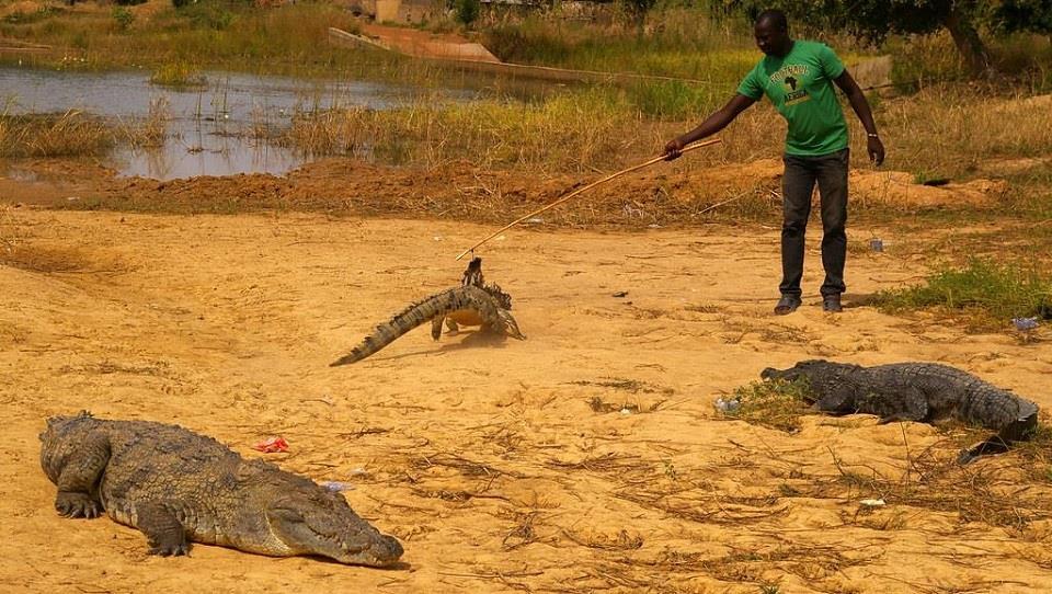 Kỳ lạ ngôi làng sống cùng hàng trăm con cá sấu - Hình 4