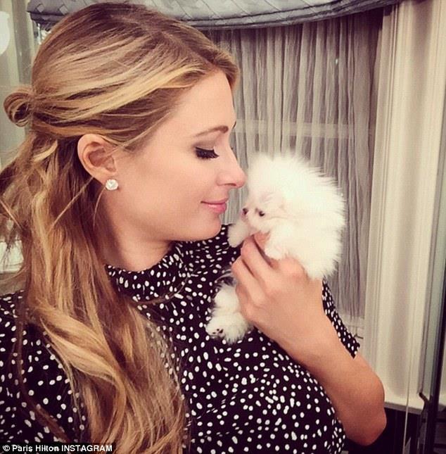 Paris Hilton bị lên án vì dùng chú chó nhỏ làm trang sức - Hình 4
