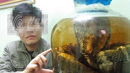 Cơ hội ngàn vàng đến: Dàn trận, tóm sống đại hổ chúa khổng lồ 7m - Hình 1