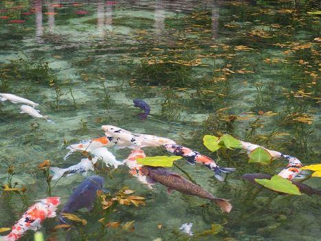 Hồ nước đẹp như tranh sơn dầu hớp hồn du khách đến Nhật Bản - Hình 3