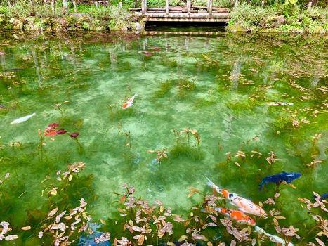 Hồ nước đẹp như tranh sơn dầu hớp hồn du khách đến Nhật Bản - Hình 4
