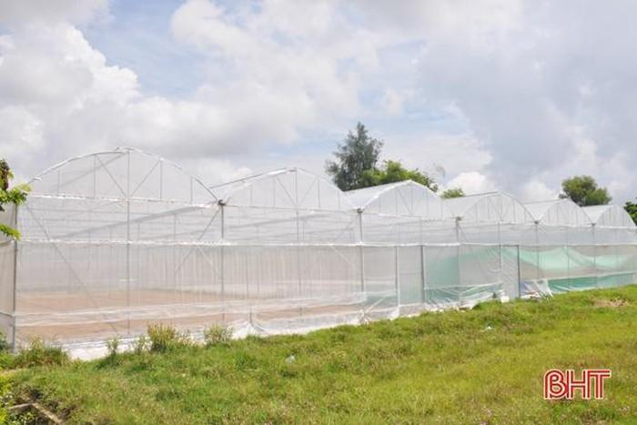 Mô hình nhà màng công nghệ cao ở Hà Tĩnh cho thu nhập hàng trăm triệu đồng - Hình 6
