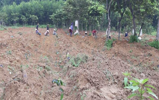 Thần dược phòng the xứ Bắc bén rễ trên quê nghèo ở Quảng Ngãi - Hình 2