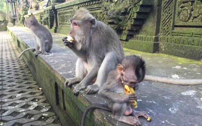 Ubud - Trái tim của Bali - Hình 5