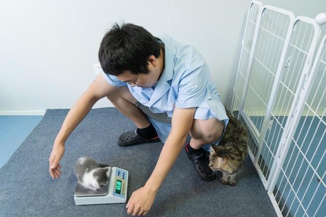 Vào ngày 21 tháng Bảy năm 2019, Bé Tỏi - con mèo nhân bản đầu tiên của Trung Quốc ra đời - Hình 4