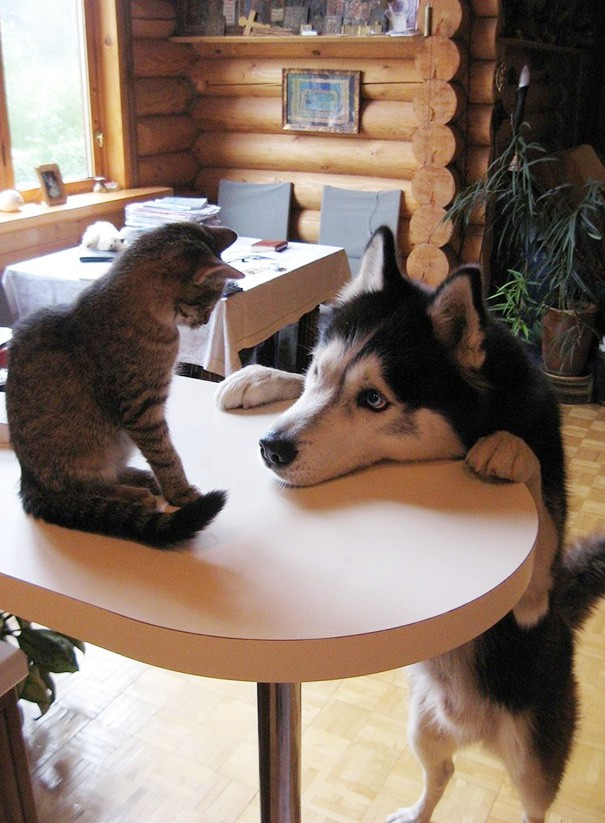 Những bức ảnh chứng minh chó mèo không ghét nhau như chúng ta tưởng - Hình 8