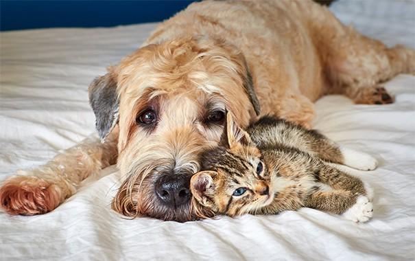 Những bức ảnh chứng minh chó mèo không ghét nhau như chúng ta tưởng - Hình 16