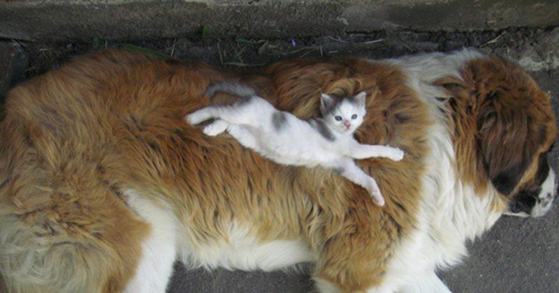 Những bức ảnh chứng minh chó mèo không ghét nhau như chúng ta tưởng - Hình 1