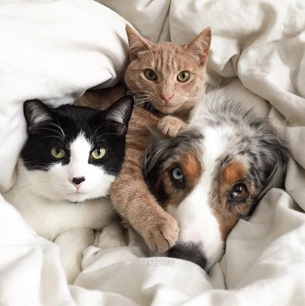 Những bức ảnh chứng minh chó mèo không ghét nhau như chúng ta tưởng - Hình 15