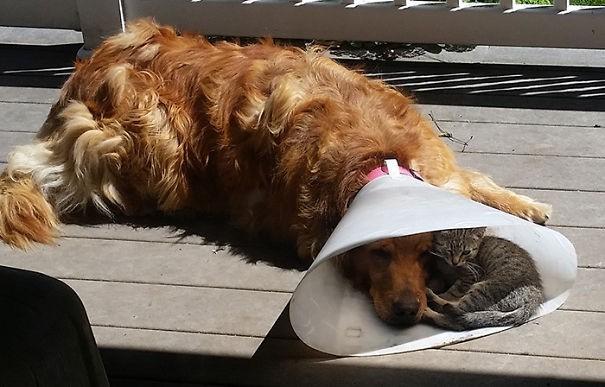 Những bức ảnh chứng minh chó mèo không ghét nhau như chúng ta tưởng - Hình 2