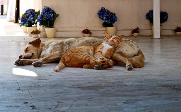 Những bức ảnh chứng minh chó mèo không ghét nhau như chúng ta tưởng - Hình 3