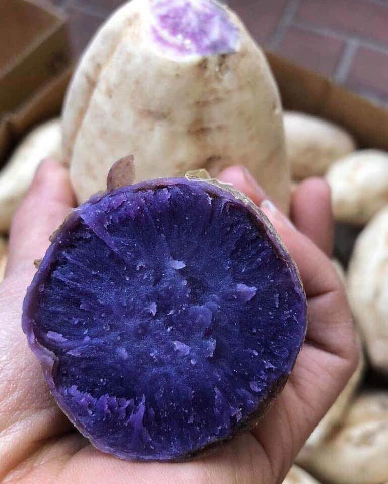 Bất ngờ củ khoai lang ruột màu tím lịm giá đắt gấp 20 lần - Sức khỏe - Việt Giải Trí
