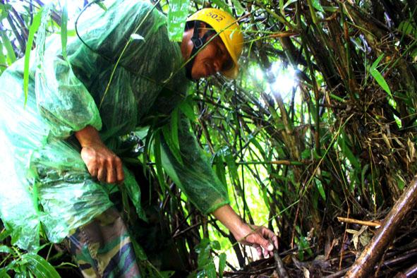 Đắk Lắk: Cơ cực nghề vào rừng sâu săn măng rừng ở Buôn Đôn - Hình 1