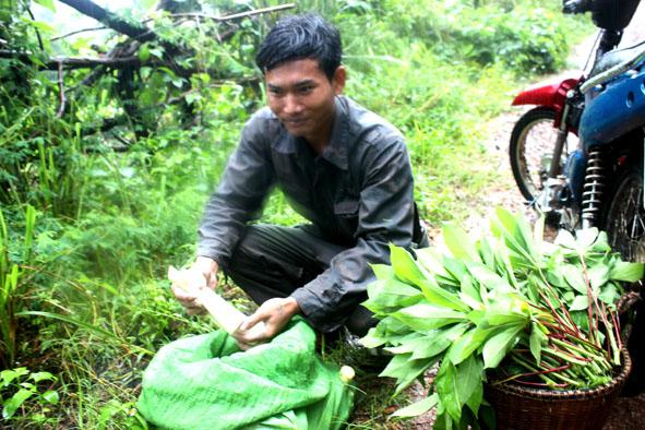 Đắk Lắk: Cơ cực nghề vào rừng sâu săn măng rừng ở Buôn Đôn - Hình 2
