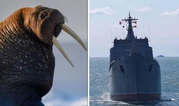 Quát vật đánh chìm tàu hải quân Nga, thủy thủ đoàn hốt hoảng tháo chạy - Hình 1
