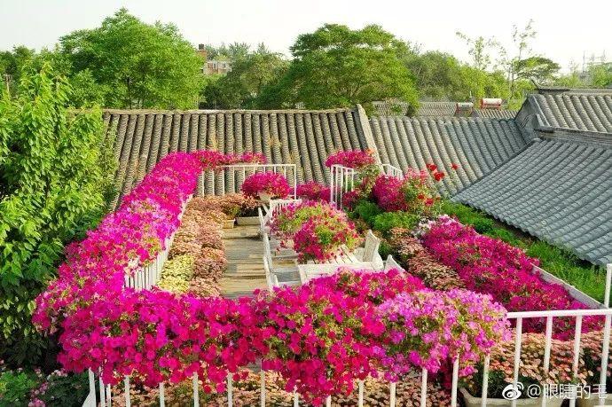 Cô gái trẻ bỏ ra 1,3 tỷ đồng cải tạo đất, mua giống hoa, biến sân nhà thành khu vườn đẹp lung linh - Hình 23