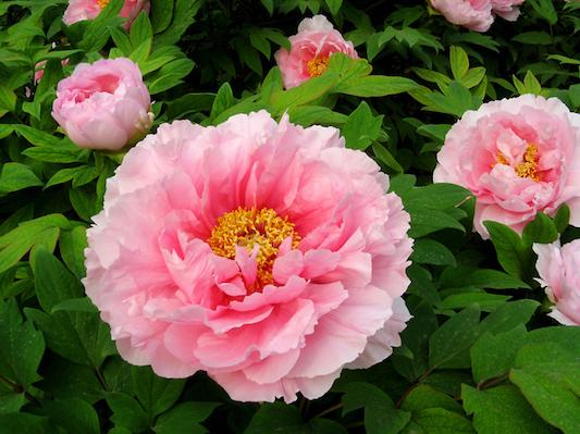 Phong thuỷ bất ngờ từ những loài hoa quen thuộc cắm trong nhà - Hình 1