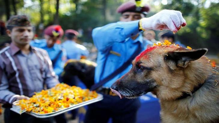 Độc đáo những lễ hội tôn vinh chó và khỉ - Hình 1