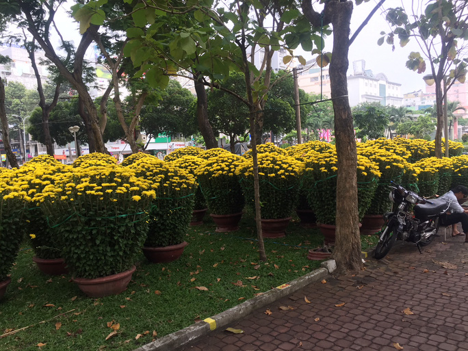 Đường phố TP HCM tràn ngập hoa Tết bán sớm - Hình 9