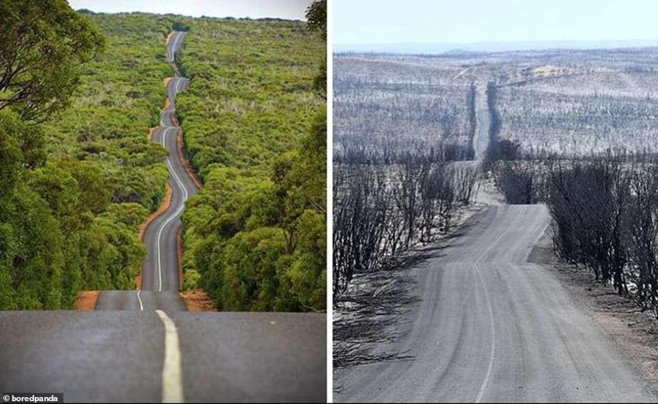 Ám ảnh cảnh tượng ở Australia trước và sau thảm họa cháy rừng - Hình 1