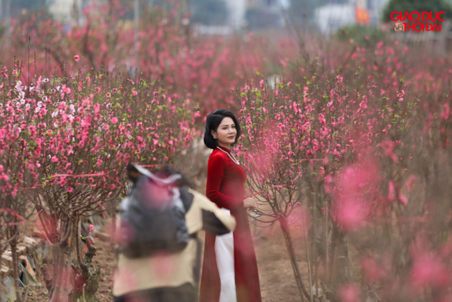 Đào bung nở nhuộm đỏ làng hoa Nhật Tân - Hình 1