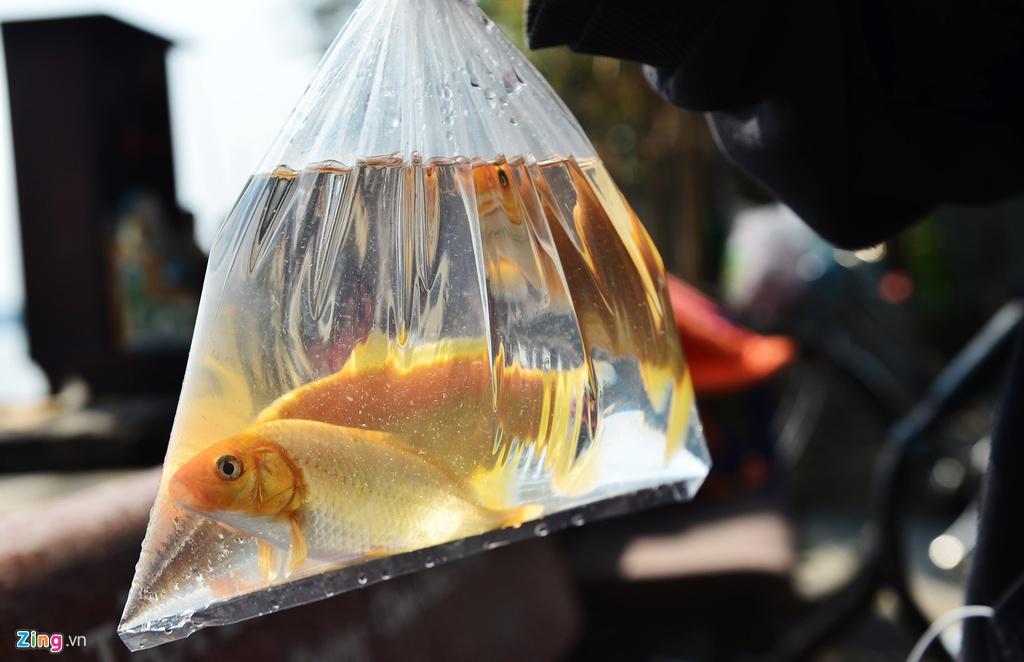 Thả cá, phóng sinh ồ ạt dịp lễ Tết - tạo phúc hay gây tội? - Hình 1