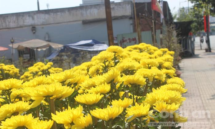 Trăm hoa khoe sắc trên tuyến đường đẹp nhất TP.HCM - Hình 1
