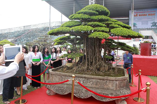 Đại gia đất Tổ trả 7 tỷ đồng vẫn không mua nổi cây sanh, tại sao? - Hình 1