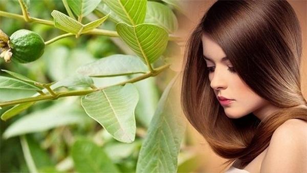 14 cách trị rụng tóc tại nhà nhanh nhất từ nguyên liệu thiên nhiên - Hình 4