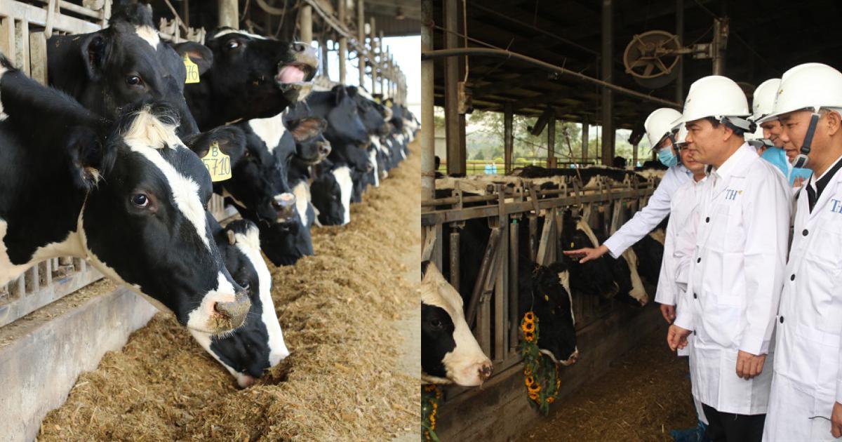 Dự án nông nghiệp công nghệ cao tại Cao Bằng mà Tập đoàn TH đầu tư 2.544 tỷ đồng có gì đặc biệt?