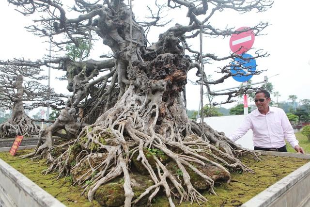 Đã mắt với vẻ kỳ quái, hầm hố của siêu cây, trả bao nhiêu cũng không bán - Hình 2