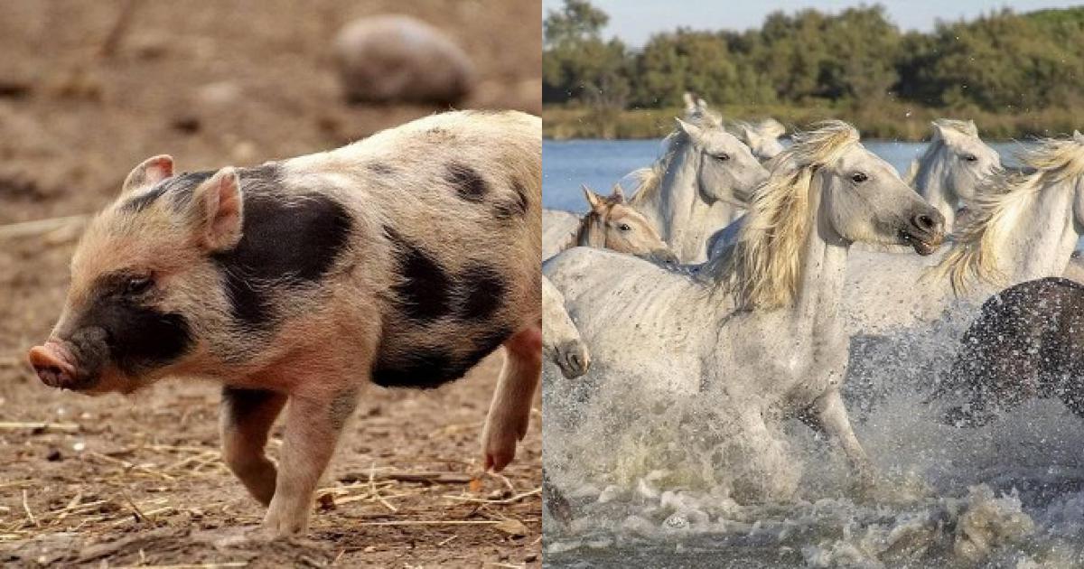 Tuần mới, 3 con giáp này gặp nhiều may mắn, có cơ hội thăng tiến, được quý nhân tương trợ