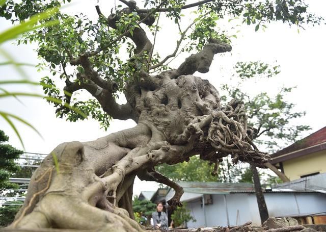 Ngắm cây cảnh huynh đệ đồng khoa kỳ dị đặt trong nhà - Hình 5