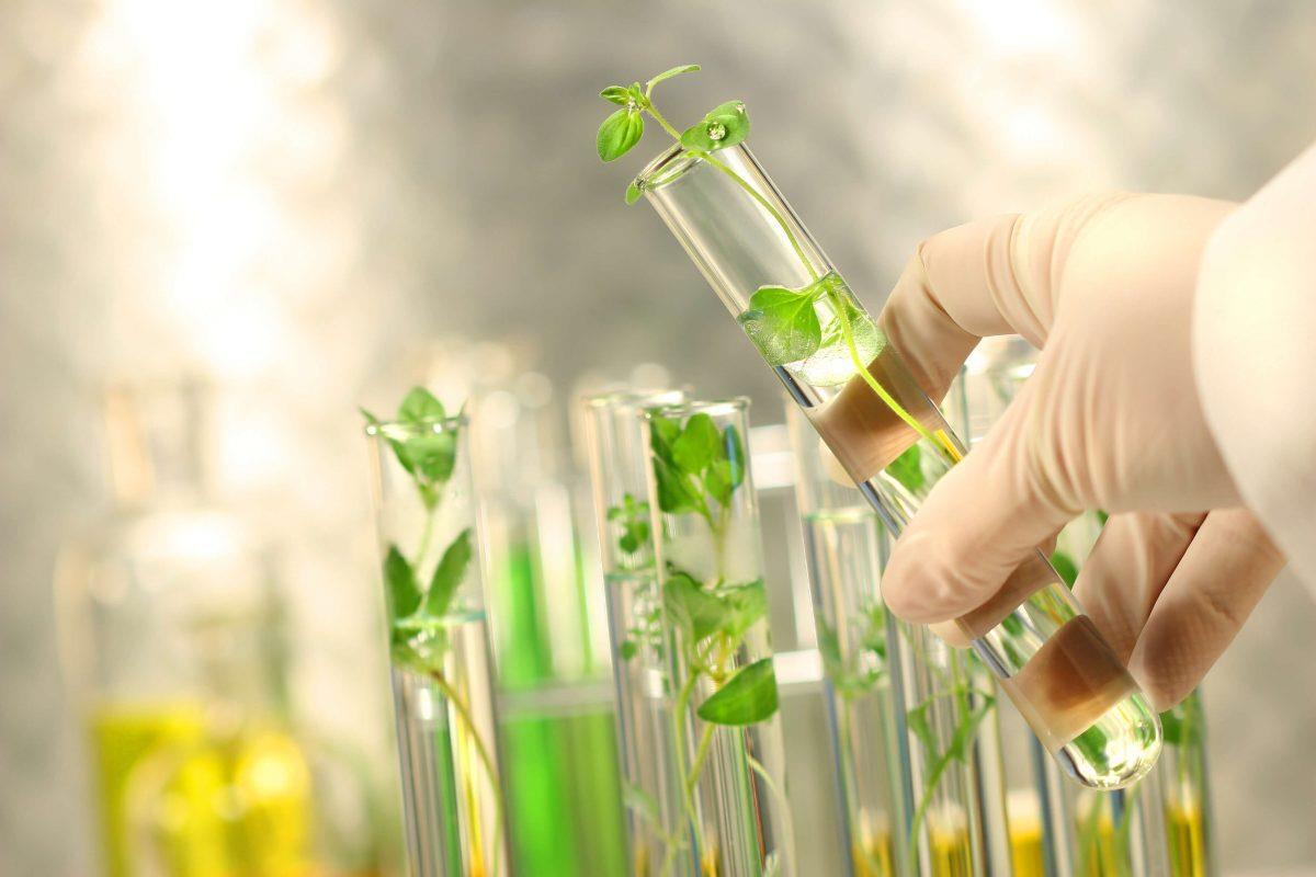 Mỹ phẩm chiết xuất từ tế bào gốc noãn thực vật: Lựa chọn mới khắc phục các vấn đề lão hóa của làn da - Hình 1