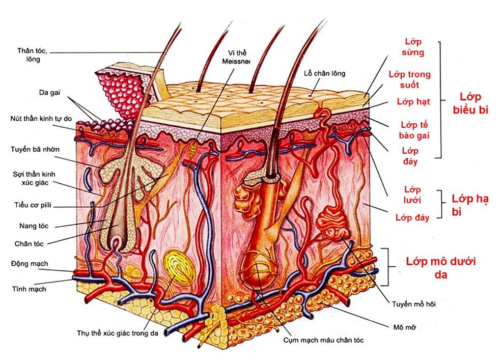 Nguyên nhân khiến da bạn nổi mụn, sớm có nếp nhăn - Hình 3