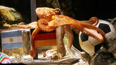 Những con vật nổi tiếng cùng bóng đá - Hình 1