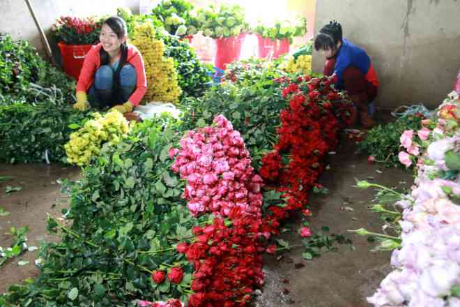 Lần đầu tiên hoa hồng Đà Lạt rớt giá mạnh trước lễ Tình nhân 14/2 - Hình 1