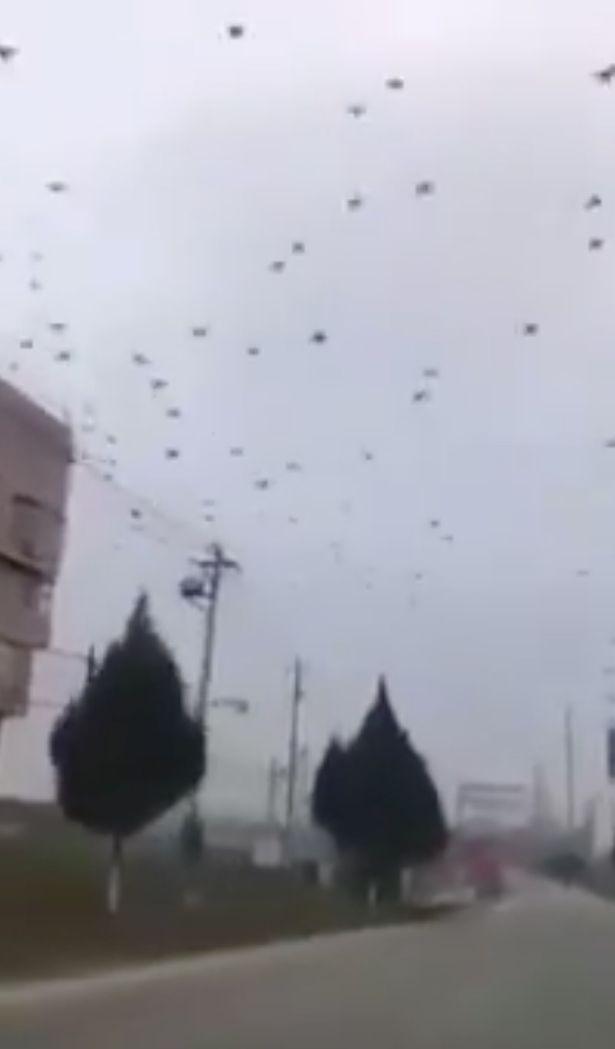 Tâm dịch corona: Vũ Hán bỗng dưng xuất hiện hàng ngàn quạ đen bay trên trời - Hình 1